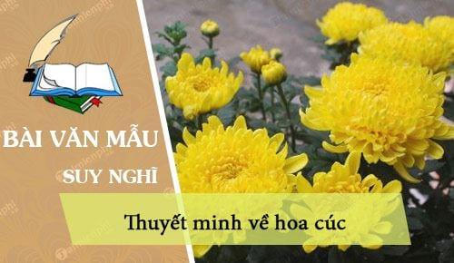 thuyet minh ve hoa cuc