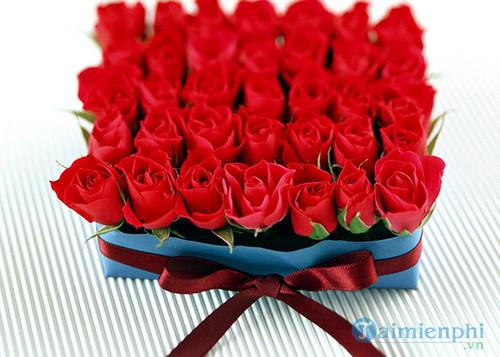 hinh anh hoa dep 20 10