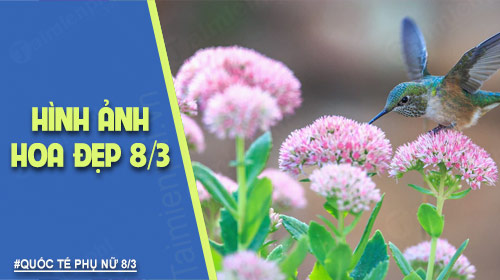 hinh anh hoa dep 8 3 nhung bo hoa dep nhat danh cho ngay phu nu